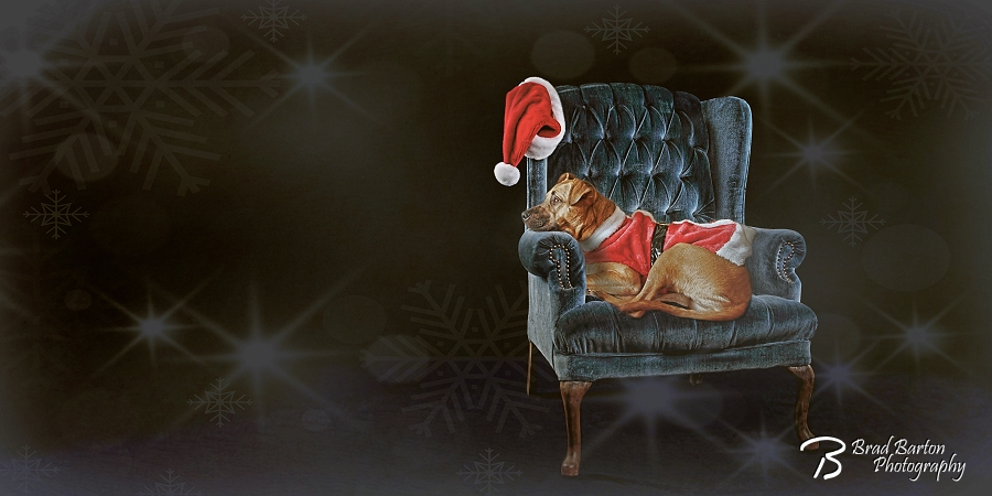 Dog Christmas Photo Grand Prairie