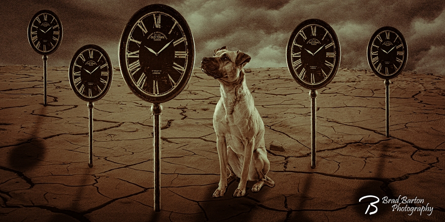 Dog Portrait Surreal