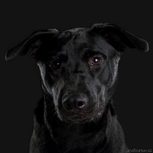 Dallas Pet Dog Photographer-130